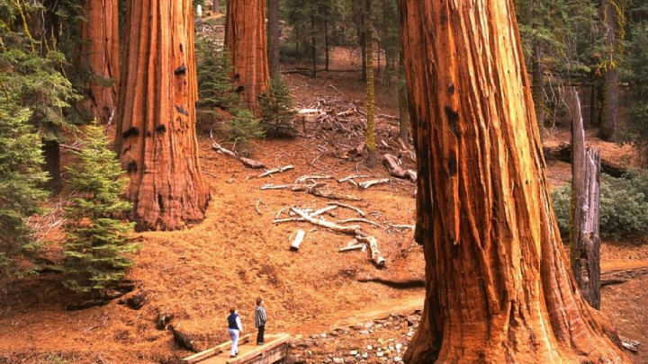 Sequoias East